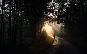 Картинка дорога, свет, человек