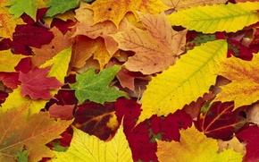 Обои осень, листья, природа, времена года, желтые, красные, разноцветные, опавшие
