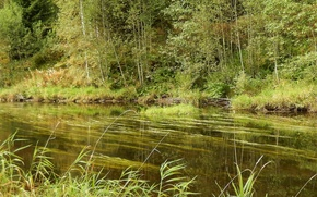 Картинка лето, трава, деревья, река
