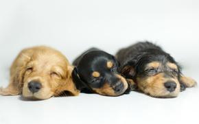 Обои щенки, собаки, уют