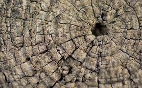 Картинка макро, дерево, текстура