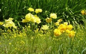 Картинка roma, italia, flowers