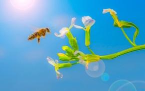 Картинка цветок, солнце, пчела