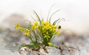 Обои камни, листья, цветы, желтые, весенние