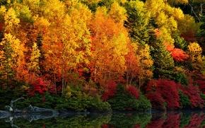 Картинка осень, лес, листья, деревья, отражение, река, багрянец