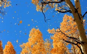 Картинка осень, небо, природа, листва