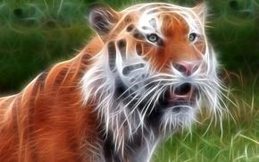Обои тигр, обработка, зверь