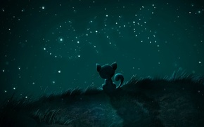 Картинка звезды, рыба, Ночь, кошак