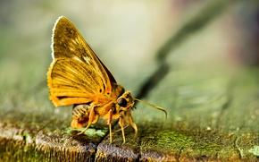 Картинка фон, бабочка, мох, желтая
