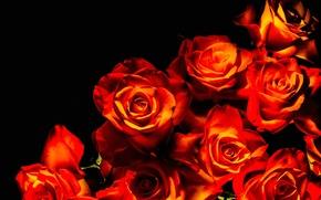 Картинка фон, розы, охапка