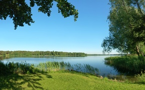 Картинка лето, трава, деревья, природа, река, камыши