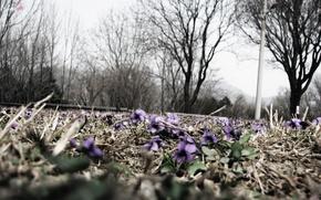 Обои цветы, макросьемка, природа