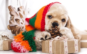 Картинка шапка, собака, подарки, щенок, шишка, Американский кокер-спаниель