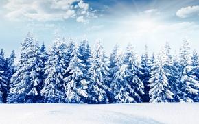 Картинка зима, лес, солнце, снег, природа, елки