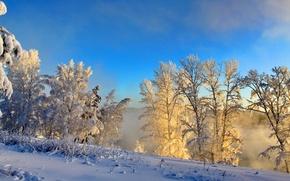 Картинка зима, снег, природа, туман, фото, кусты