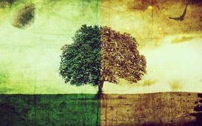Картинка холод, природа, тепло, дерево, настроение