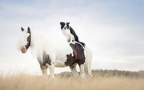 Картинка конь, собака, друзья