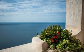 Картинка море, цветы, Средиземное море, Mediterranean sea