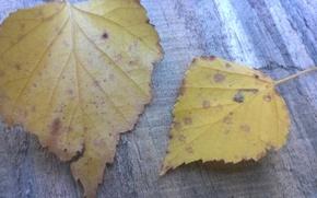 Картинка осень, Листья, макро сьёмка