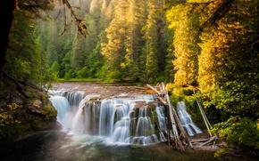 Картинка лес, река, водопад, Lower Lewis River Falls