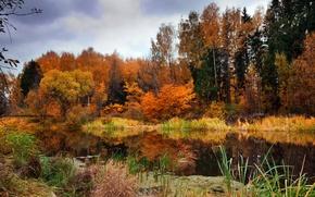 Картинка осень, небо, вода, облака, деревья, природа, широкоформатные