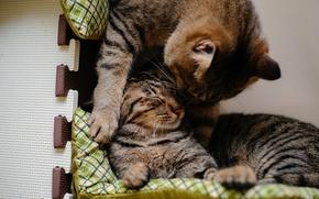 Картинка котенок, подушки, ласка, полосатая кошка