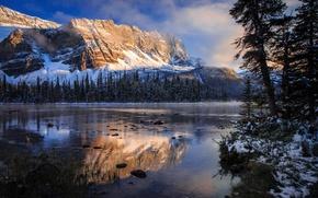 Картинка осень, отражения, озеро, утро, Канада, Скалистые горы, национальный парк Банф, Боу
