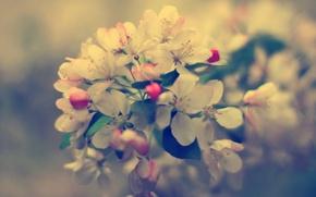 Картинка цветы, макро, ветка, фон, растения, природа, обои, цветение, весна, фото, бутоны