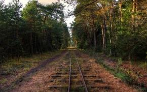 Картинка лес, деревья, железная дорога, заброшенность