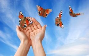 Картинка небо, бабочки, руки