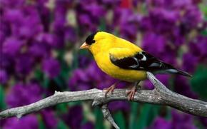 Картинка листья, цветы, ветка, птичка, американский, сухая, щегол