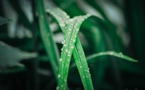 Картинка лето, капли, дождь, вечер, Листья