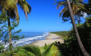 Картинка море, волны, пальмы, кустарники, тропик