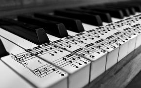 Обои karl683, черно-белое, клавиши, ноты, пианино