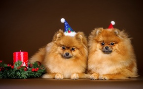 Картинка собаки, фон, праздник