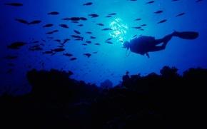 Обои дайвинг, sansalvador, Багамские Острова