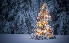 Картинка зима, лес, снег, елка, гирлянды