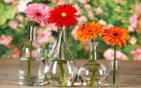 Картинка отражения, цветы, стол, бутылка, боке, хризантема, вазочки