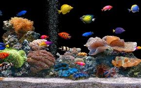 Картинка цвет, аквариум, рыбка, кораллы, полипы