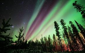 Картинка северное сияние, Aurora Borealis, ночь, звезды, природа