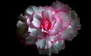 Обои цветок, фон, краски, лепестки