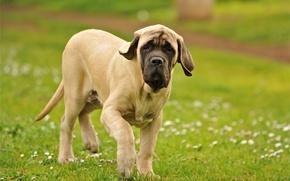 Картинка поле, собака, прогулка