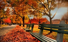 Картинка осень, природа, парк, листва, Nature, скамейки, trees, park, autumn, leaves, fall