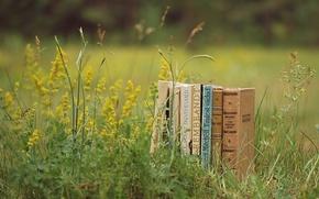 Картинка зелень, лето, трава, природа, настроение, поляна, книги, растения, чтение
