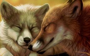 Картинка пара, лисы, мордочки