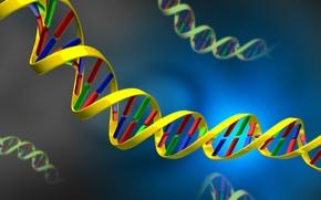 Обои ДНК, nucleic, acid, DNA