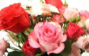 Картинка цветы, красивая, flowers, beautiful, Букет из роз, Bouquet of roses