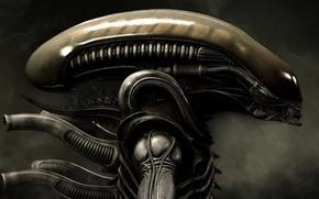 Обои Aliens, Голова Чужого, Чужой, Alien