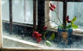 Обои цветы, стекло, окно, фон