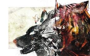 Картинка тигр, волк, vhm-alex, bloodbeat